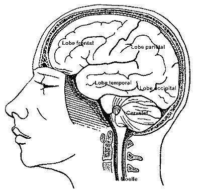 Generalites Embryogenese